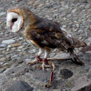 Otavalo - Parque Condor