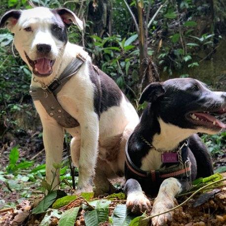 Ständige Begleiter, unsere beiden Hunde Vaco und Becky